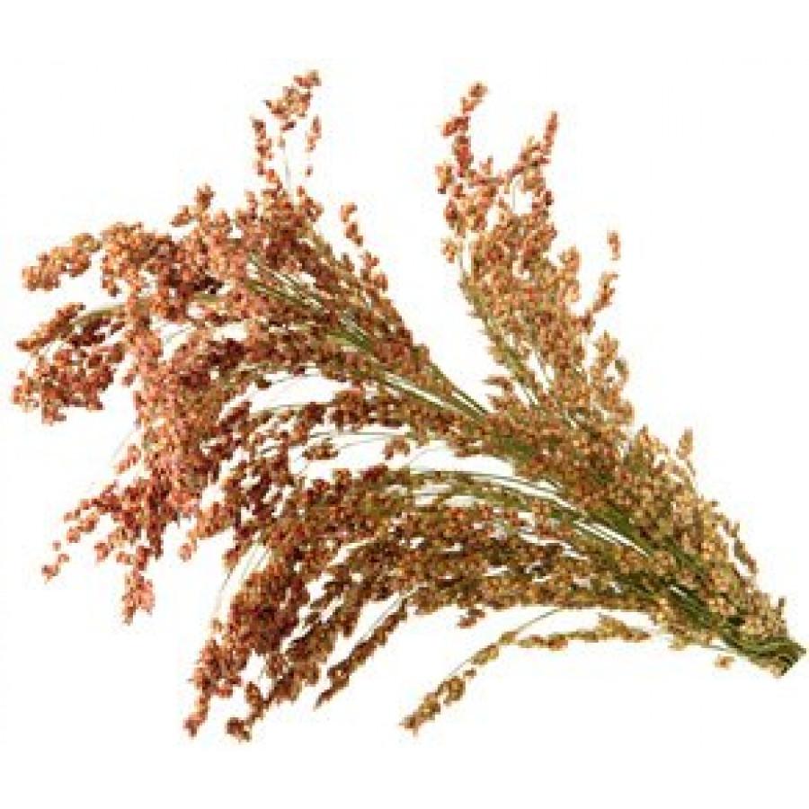 Каталог семян | AliSun.shop